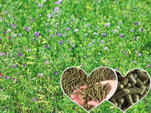 Alfalfa Pellet