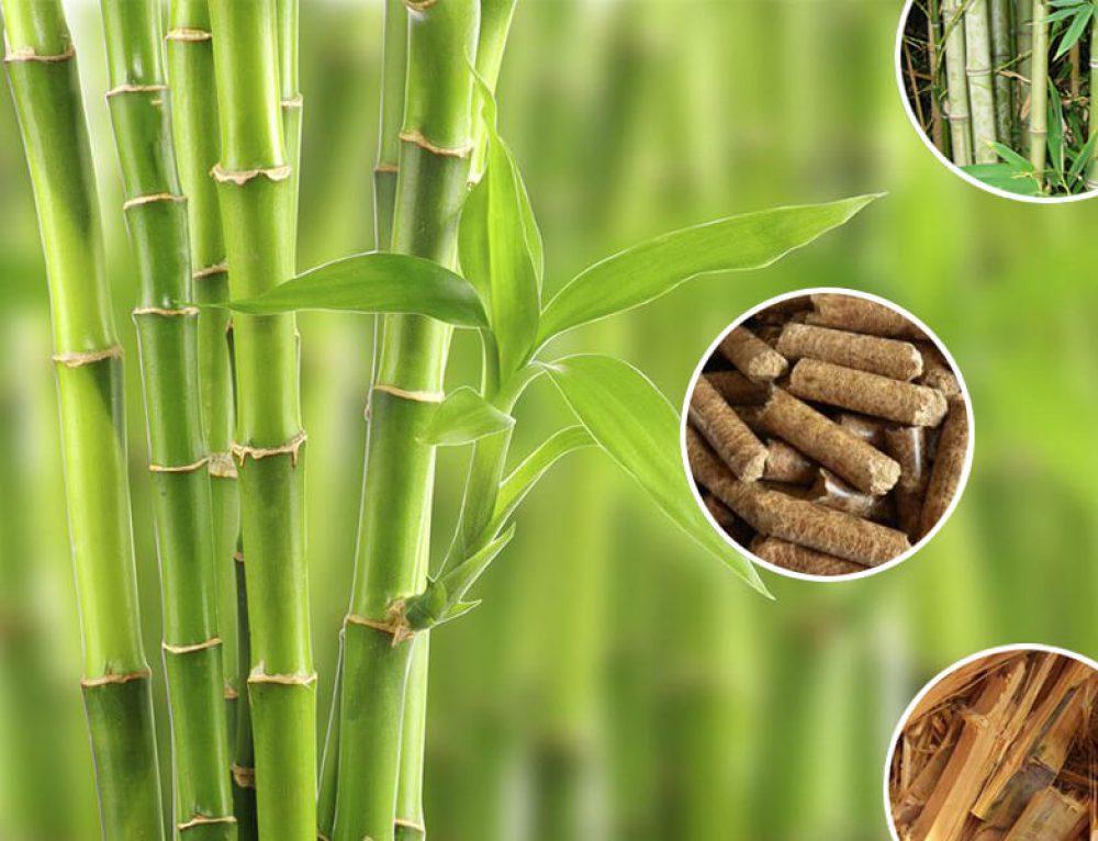 Выбрать правильный гранулятор для пеллет бамбука